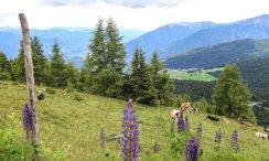 Bauernhofurlaub in Südtirol auf dem Walderhof