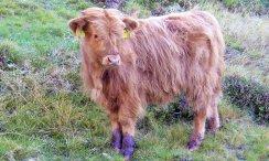 Bauernhofurlaub in Südtirol mit Tieren