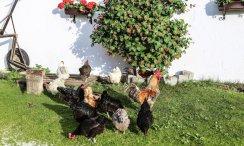 Tierischer Bauernhofurlaub in Südtirol